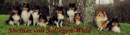 """Shelties """"von Solingen-Wald"""""""